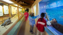 Pacific Grove Museum of Natural History - Monterey