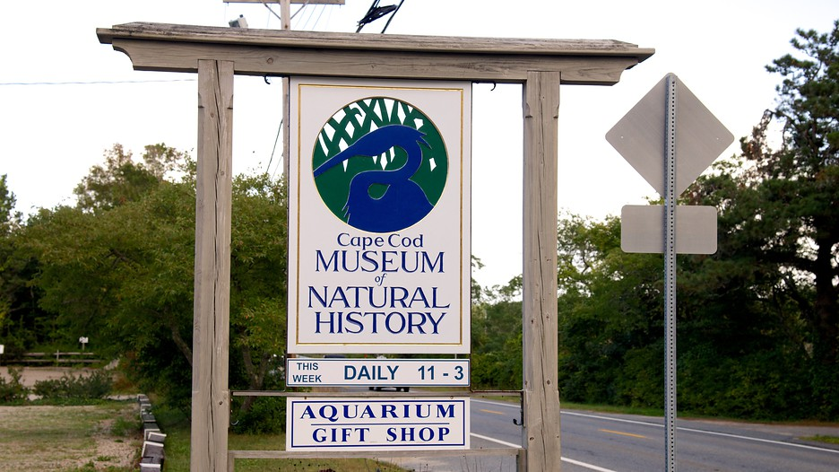 Museum Of Natural History Brewster Massachusetts