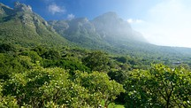 Kirstenbosch National Botanical Gardens - Cape Town