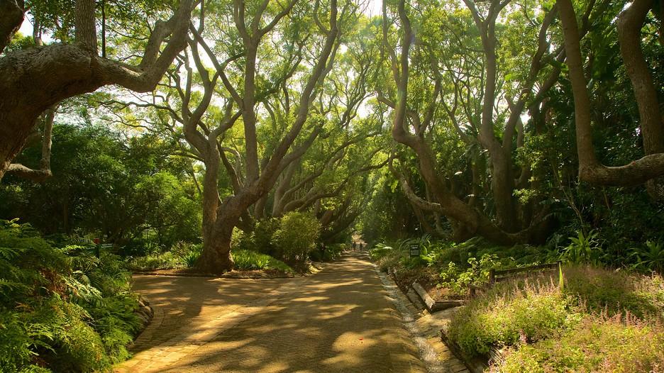 Kirstenbosch national botanical gardens in cape town for Jardin kirstenbosch