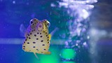 Scottish Sealife Sanctuary - Argyll and Bute - Tourism Media