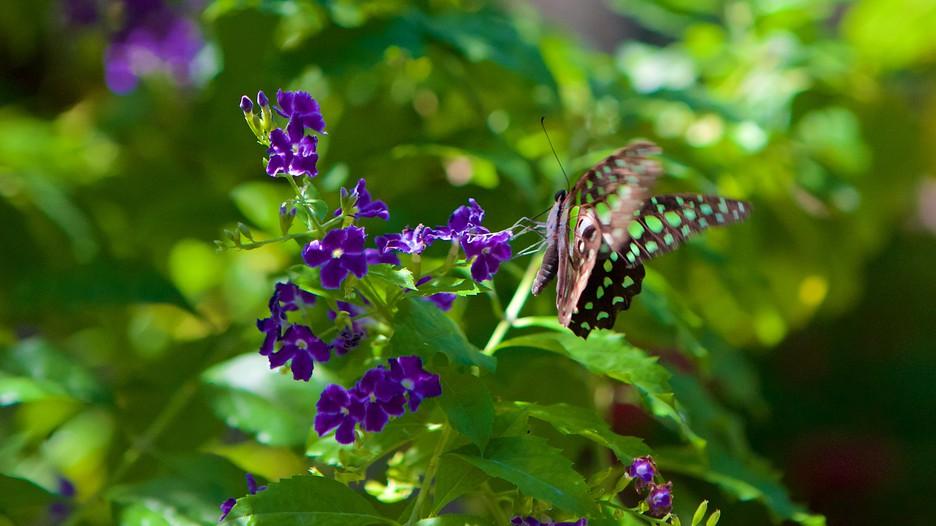 butterfly farm dabruzzo region - photo#44