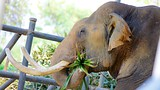 Showing item 46 of 59. Pattaya Elephant Village - Pattaya - Tourism Media