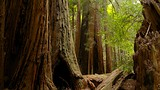 Muir Woods - North America - Tourism Media