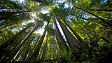 Muir Woods - Marin County - Tourism Media